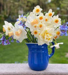 HOW TO DEADHEAD DAHLIAS FOR BLOOMS ALL SEASON LONG   The Impatient Gardener Liquid Fertilizer, Organic Fertilizer, Pruning Azaleas, Growing Dahlias, Portable Greenhouse, Little Buds, Little Potatoes, Pretty Good, Bouquet