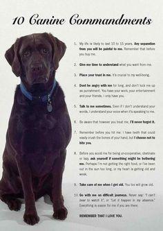10 canine commandments (cats, too!)
