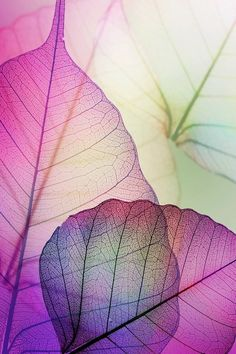 Leaves purple effect Wallpaper Autumn Nature Wallpapers) – HD Wallpapers Cool Wallpaper, Pattern Wallpaper, Spring Wallpaper, Phone Backgrounds, Wallpaper Backgrounds, Leaves Wallpaper, Cellphone Wallpaper, Iphone Wallpaper, Motif Floral