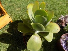 Fichas Plantas Suculentas y Cactus | Hoja | Tallo de la planta Cactus Y Suculentas, Plants, Plant Stem, Types Of Succulents, Container Gardening, Cold Porcelain, Leaves, Index Cards, Gardens