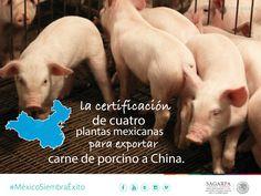 La certificación de cuatro plantas mexicanas para exportar carne de porcino a China. SAGARPA SAGARPAMX #MéxicoSiembraÉxito
