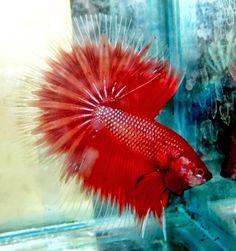 Dunia Ikan Ikan Info On Pinterest