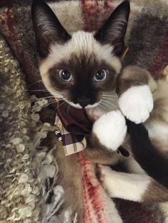 awwww-cute: Pancakes first attempt at a collar went...
