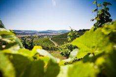 Weinberg vom Wein- und Sektgut Bamberger an der Nahe #Nahe #Nahewein #Riesling #Sekt #Bamberger #Meddersheim #Wein #Winzer #Weingut