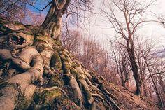 Procházka...#prochazka #walk #tree #trees #roots #nature #lovenature #love #spring #instagood #instadaily #instagram #500px #vsco @fajnova_cz @akcevostrave #from #ostrava #ostravacity #by #janjasiok