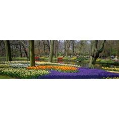 Keukenhof Garden Lisse The Netherlands Canvas Art - Panoramic Images (36 x 12)