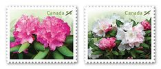 Rhododendrons 2009 Canada Postage