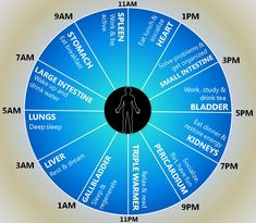 Discover the best time to do your everyday activities, according to the Human Body Energy Clock cycle.