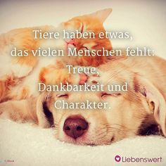 Sayings for animal lovers- Sprüche für Tierliebhaber Animals are man& best friends. That is why we have summarized the most beautiful sayings on the subject of love for animals. Cute Baby Animals, Animals And Pets, Cute Puppies, Dogs And Puppies, Pet Dogs, Dog Cat, Cool Pictures, Beautiful Pictures, Cat Vector