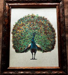 Peacock Art from 1910 Art Print on Your Choice of 2 by apageintime, $7.50