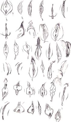 Sketches de vaginas
