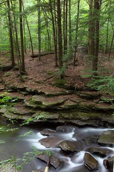 ✯ Hemlock Forest  That rock reminds me of the word shale.  I wonder if that's what it is.  It also resembles fungi on a tree branch I snapped a pic of once.   Nature can be so graceful...leading the eye from the height of the trees down to the water.  Lovely.