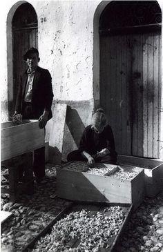 Palermo  La lavorazione della manna  antichi Mestieri  anni '30    #TuscanyAgriturismoGiratola