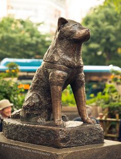 Hachikō statue (ハチ公) located in Shibuya, Tokyo. This is a statue of a dog who waited for his master to come home on the afternoon train. Still, the dog waited at the same time every day for years, until he died. Hachiko Statue Shibuya, Osaka, Okinawa, Japon Tokyo, Shibuya Tokyo, Hachi A Dogs Tale, A Dog's Tale, Tokyo Travel, Travel Tips