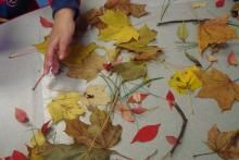 Playing with Nature on a Sticky Table from The Seeds Network