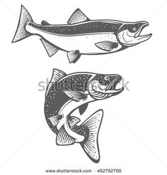 vector illustration of Salmon and Trout silhouettes