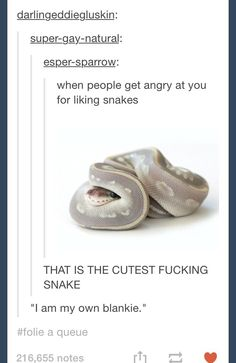 But snakes are good and pure snakes are amazing they're like little scaly puppy dogs who don't have legs snakes are pure