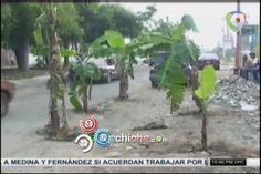 Siembran Matas De Plátanos En Avenida En Protesta Por Arreglo De Las Calles En Santiago #Video