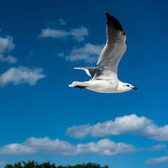 This guy was very interested in our #doritos :) #sanibel #sanibelisland #bird #beach #travel #florida #nikon #nikonphotographer #birds by stj7005 | The Beaches of Fort Myers Sanibel