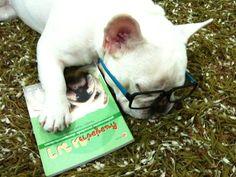 French Bulldog Fell asleep reading again.