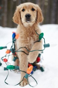 Include the dog when driving around to look at holiday lights!!