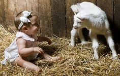 The kid goat is about 20 hours old, on wobbly knees. The kid human is older, with even wobblier knees : )