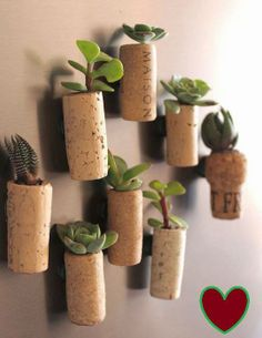 Wine corks used as plant pots