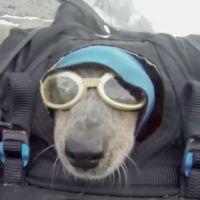 Adventurous Dog Goes Base Jumping