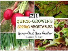 Fresh, Healthy Veggies—Fast! If you're eager to get your spring garden started, these fast-growing vegetables provide good options. All of them can be started from seed and will be ready to eat in approximately...