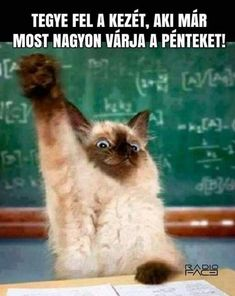 Funny Animals With Captions, Funny Animal Memes, Funny Animal Videos, Cute Funny Animals, Funny Animal Pictures, Cool Pets, Going Crazy, Cat Day, Animals And Pets
