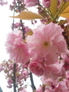 tavasszal eső után / Spring - after rain