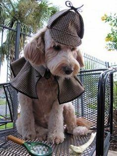 moneky dressed like shelock holmes - Google Search