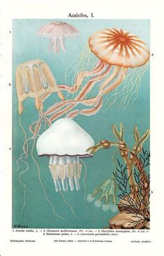 Again, I like these very natural, scientific photos.  I like the jelly fish in the top right corner best.