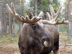 Wildlife Nature, Wild Nature, Seals, Animal Kingdom, Finland, Lamb, Natural Beauty, Letter, Google