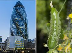 10  architectural masterpieces inspired by nature