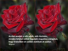 nőnapra versek - Google keresés Type 3, Let It Be, Rose, Day, Flowers, Plants, Google, Facebook, Photos