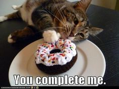 You complete me. Cat and cupcake