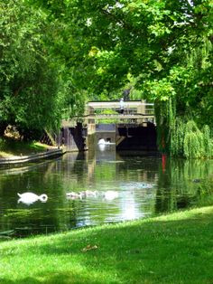 Stratford-upon-Avon:Swan lock OP had wonderful clotted cream tea here Wonderful Places, Great Places, Beautiful Places, Beautiful Beach, Beautiful Gardens, Places Around The World, Oh The Places You'll Go, Places To Visit, Birmingham