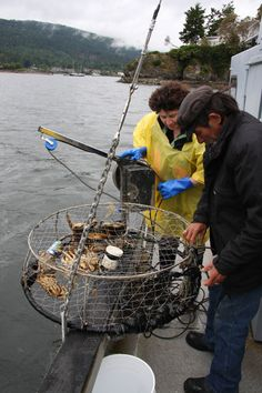 Hastings House Hotel on Salt Spring Island, B. Crab Catch Package to go crabbing & have the chef cook the catch up for dinner. Hastings House, Vancouver Island, Pacific Northwest, British Columbia, North West, Islands, To Go, Salt, Canada