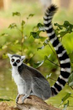 Cute Creatures, Beautiful Creatures, Animals Beautiful, Animals And Pets, Baby Animals, Cute Animals, Primates, Mammals, Beast Creature