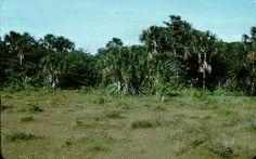 Las sabanas tropicales (praderas con árboles o arboledas dispersas) se encuentran en regiones cálidas con precipitación pluvial de entre 120...