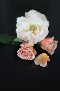 Summer rose. Rose, Garden, Floral, Flowers, Plants, Summer, Pink, Garten, Summer Time