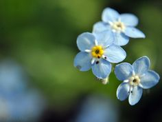 azules by turulato