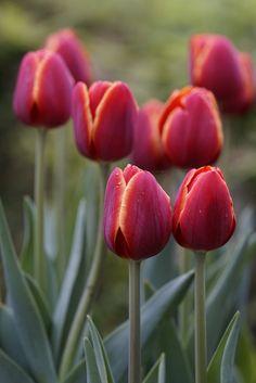 Spring                                                                                                                                                                                 Más
