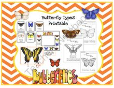 Butterfly Types Printable from Preschool Printables on TeachersNotebook.com -  (27 pages)  - Types of Butterflies-color & trace-sequencing-puzzles