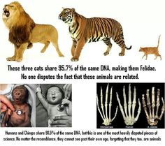 Atheism, Religion, God is Imaginary, Science, Evolution. These three cats share 95.7% of the same DNA, making them Felidae. No one disputes the fact that these animals are related. Humans and chimps share 98.5% of the same DNA, but this is one of the most heavily disputed pieces of science. No matter the resemblance, they cannot see past their own ego, forgetting that they too, are animals. Just like all of the other animals our lives do not hold any cosmic meaning.