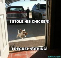 Puppy stole his chicken and regrets nothing :)