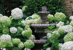 gardening with hydrengeas | ... Hydrangeas in my Garden- Click on the image to view the full blog post