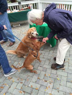 Bonz blog: Bonzo attends the annual Sea Oaks Dog Walk - w/photos #Pets #Dogs