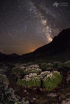 Wildflower Runoff Under The Stars by Mike Berenson - Colorado Captures on 500px